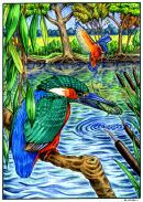 Kingfishers in their habitat