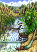 Reed bed biodiversity