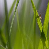 Living between grasses