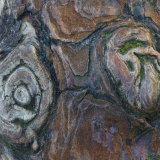 Pine art II