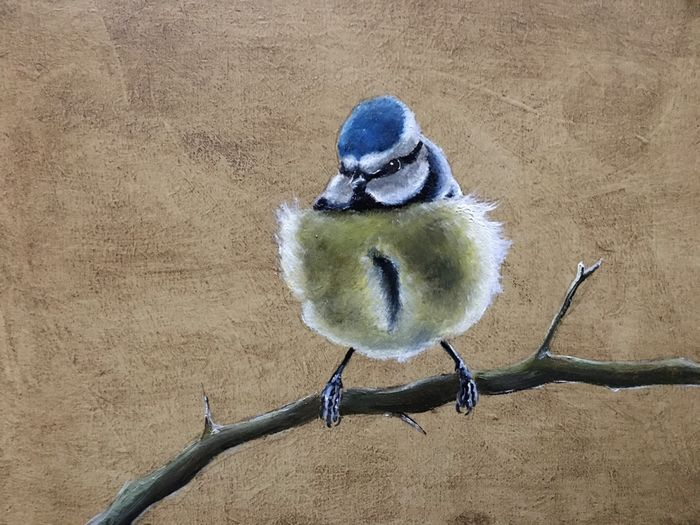 Chilly Morning -Blue Tit