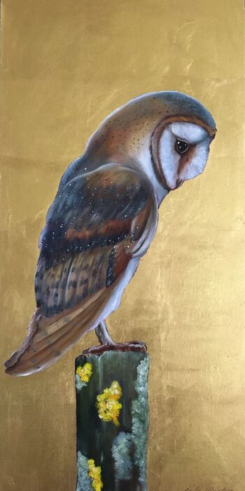 Watching Barn Owl