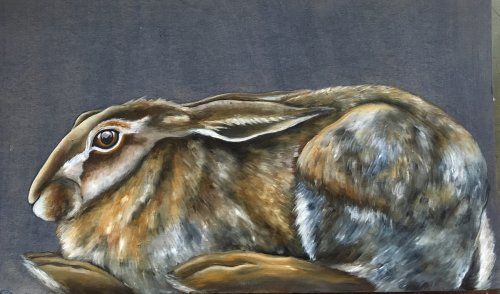 Resting Hare Study
