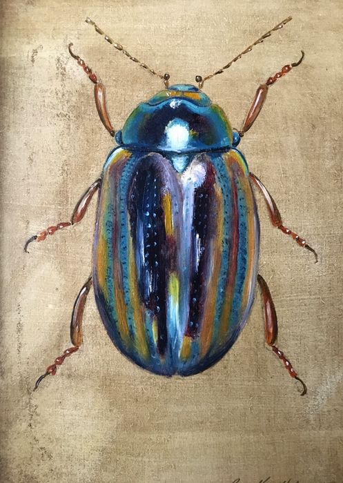 Lavender Beetle