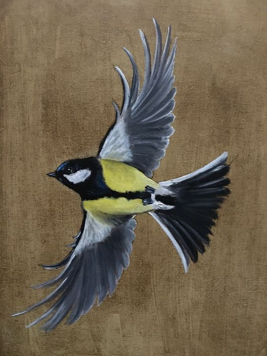 On a turning wing - Great Tit