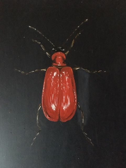 Red Plant Beetle