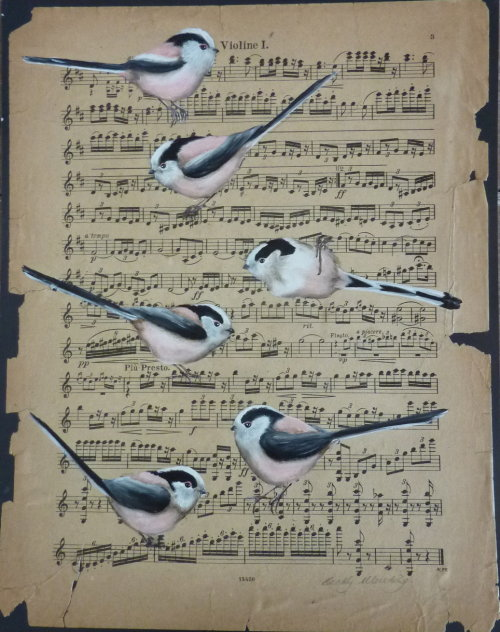 Sounds of Spring ~ Long Tailed Tits