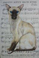Pretty Kitty Blue Eyes
