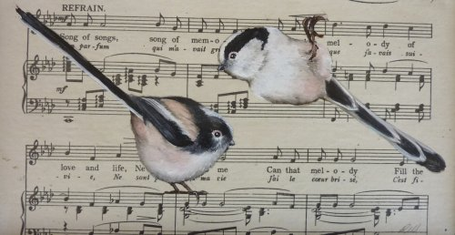 Song of Songs ~ Long Tailed Tits