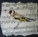 Song of Summer ~ Goldfinch
