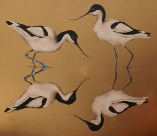 Wading Avocets