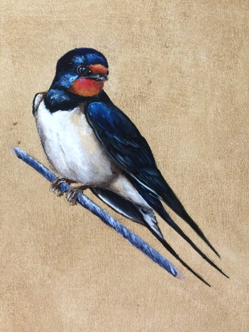 Swallow II