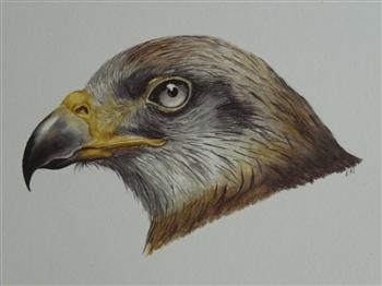 Kite (study)