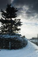 Sunny snowy lane