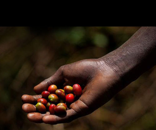 Picked Coffee