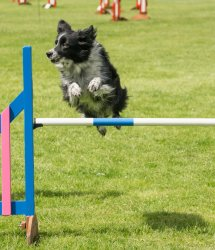 Fern agility