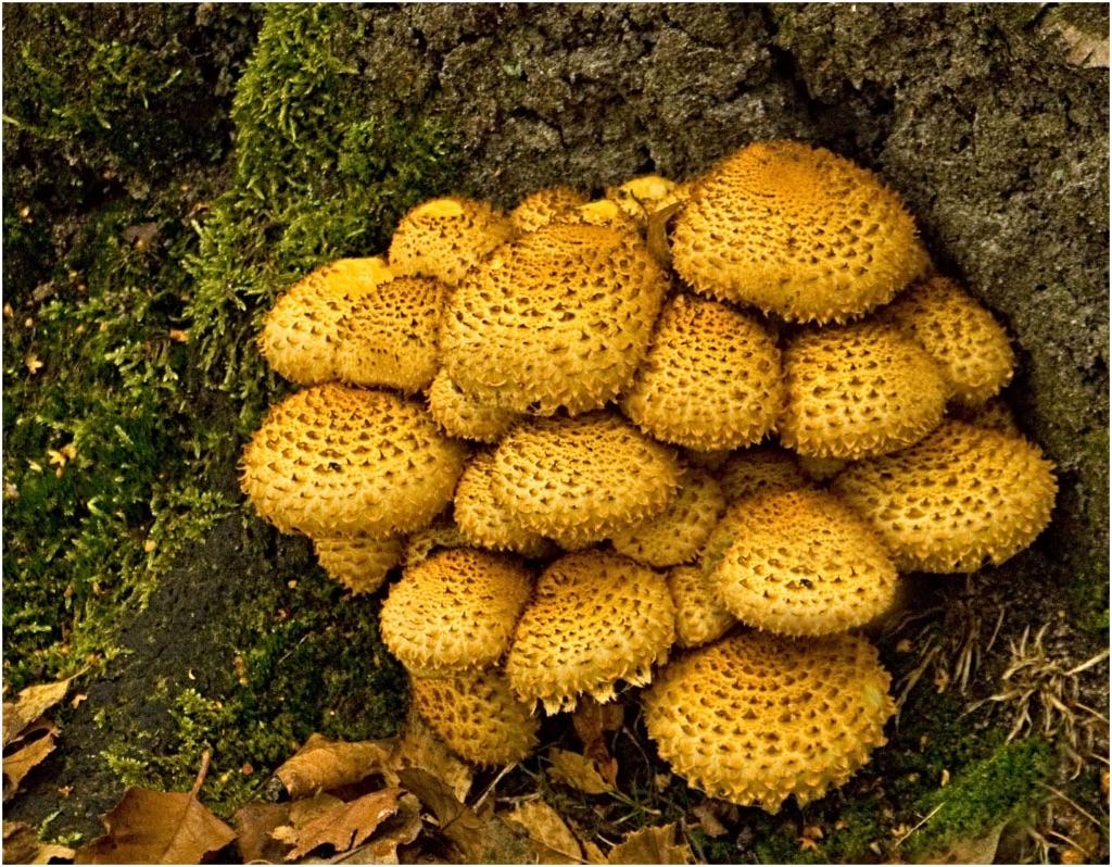 Fungi eruption