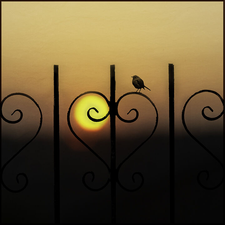 Heart Railing Sunset
