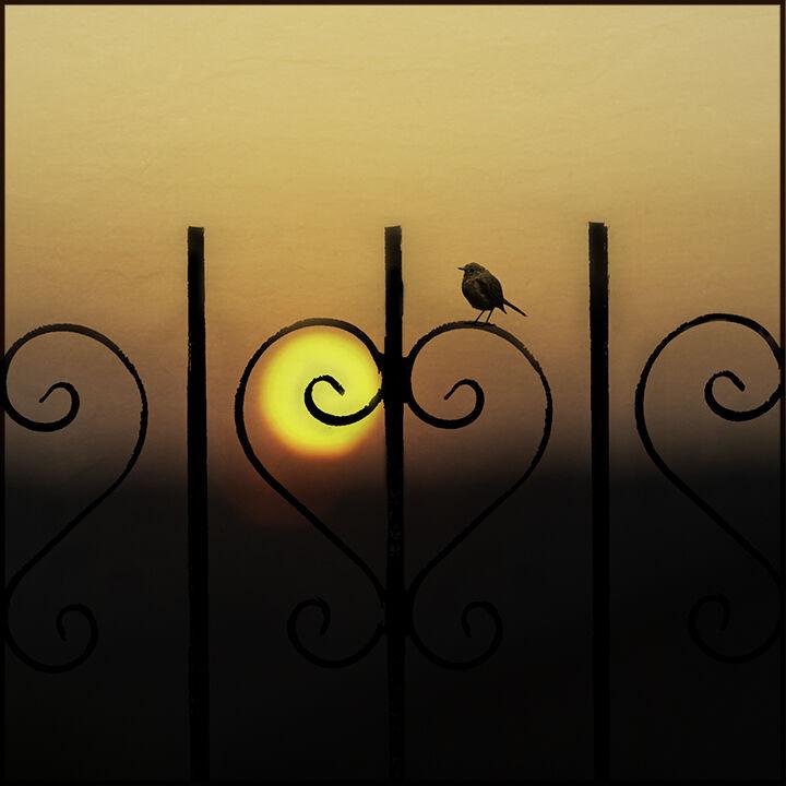 Heart Railing Sunset