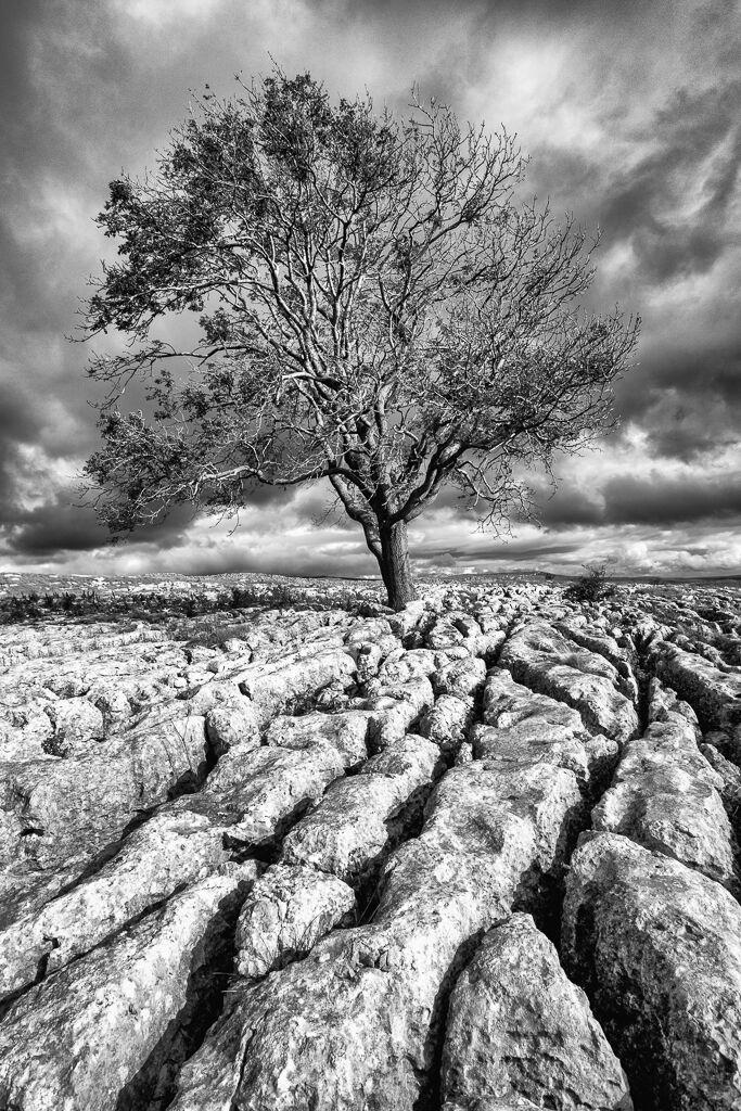 Lone Tree - Malham