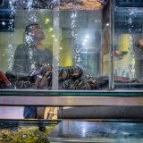 Chinatown Lobsterman
