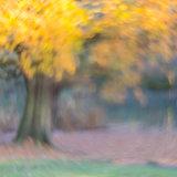 Trent Park Tree