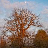 Grovelands Moonrise