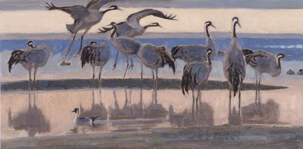Cranes at Sunset <br> £590.00
