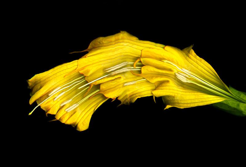 Yellow Whoosh