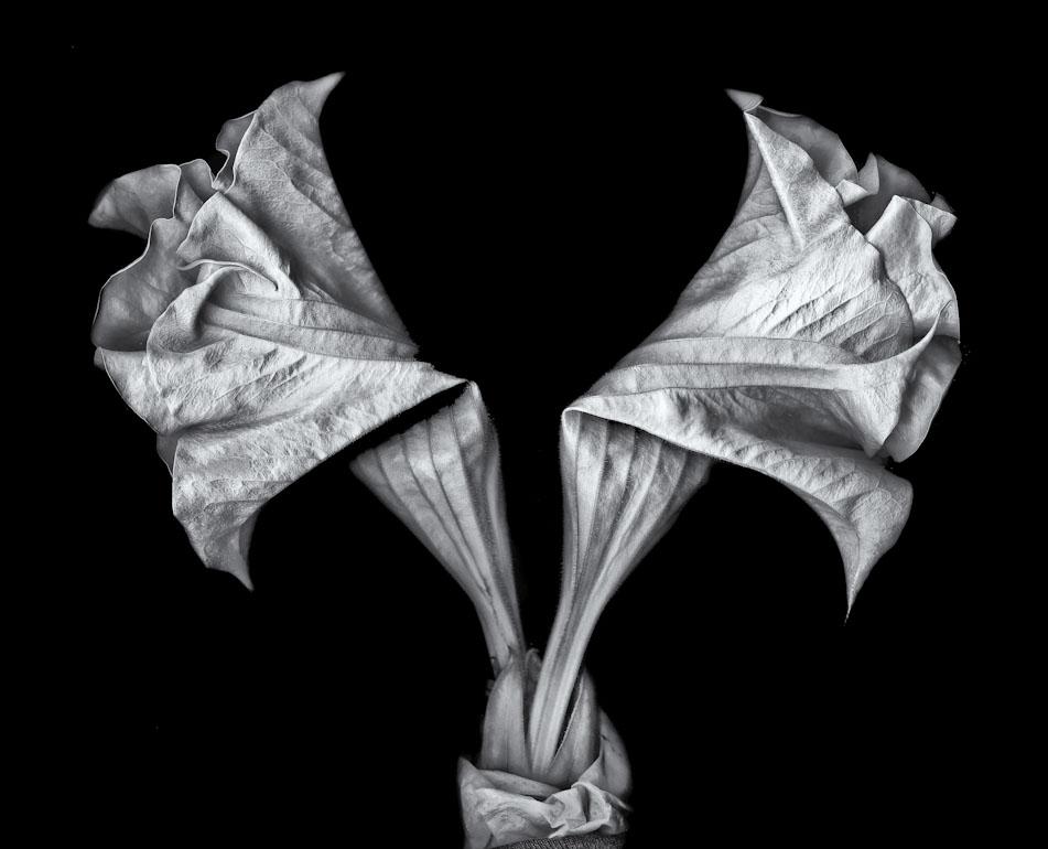 Folded Bouquet