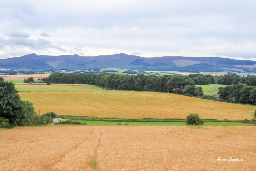 Bennachie Landscape