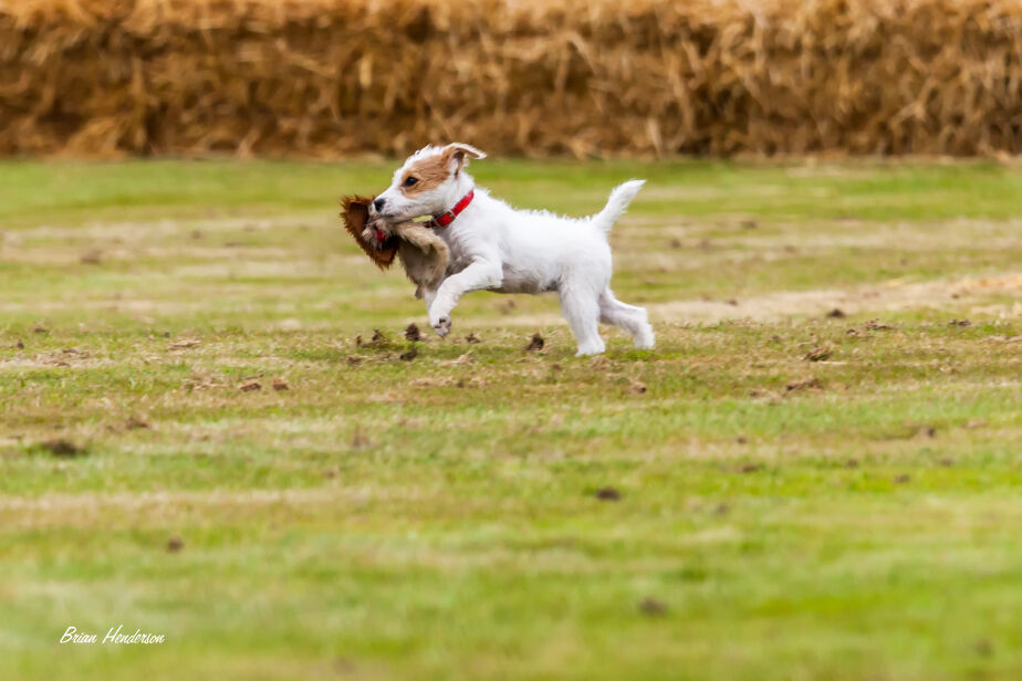 Little Terrier!