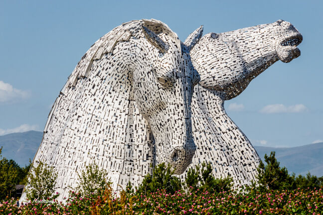 Kelpies in Broom !