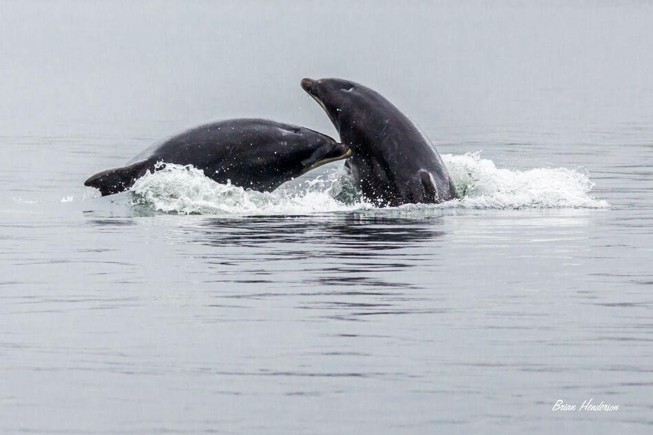 Playful Dophins !
