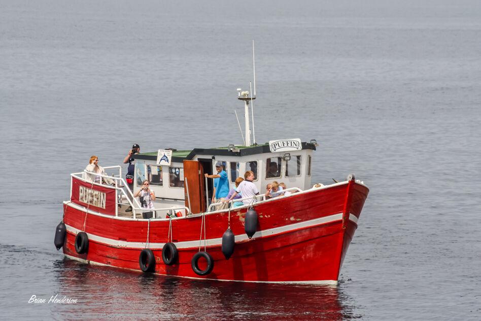 Puffin Boat Trip