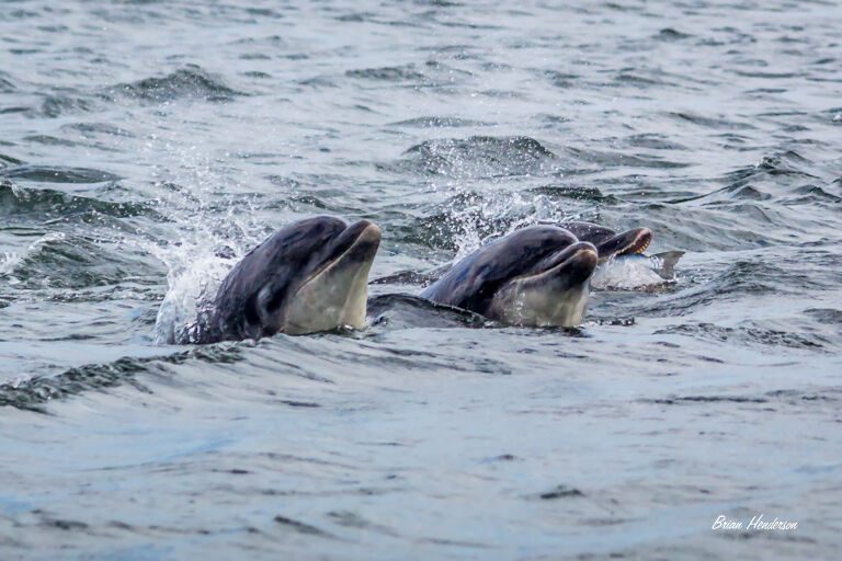 Trio of Dolphins!