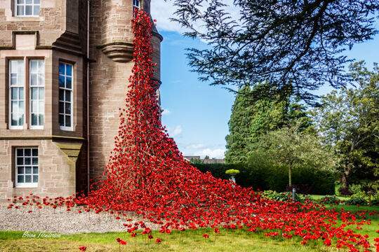 Weeping Window of Poppies