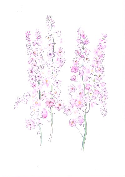 Pink Delphiniums - commission