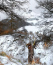 Roseberry in the snow