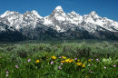 Springtime in the Tetons