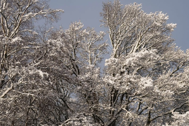 Sunlight on snow covered trees
