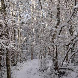 A snowy path through the trees