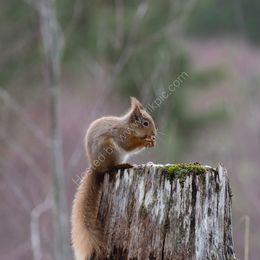 On a tree stump