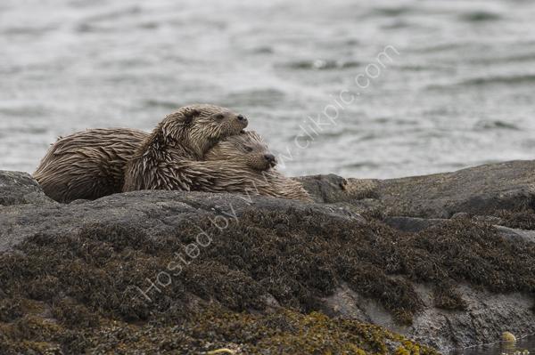 an Otter hug