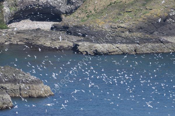 Seabirds!