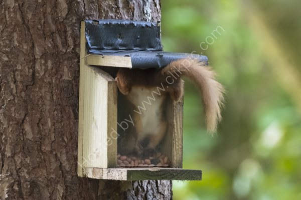 Nut hunting!