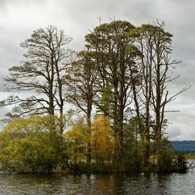 Island, Loch Mallachie