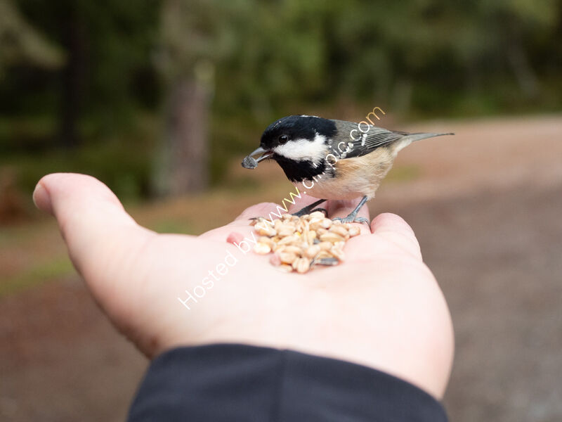 Handy bird-feeder