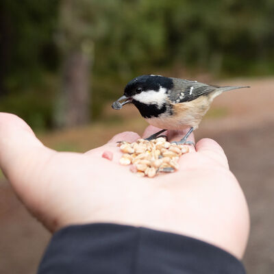 Handy bird-feeder