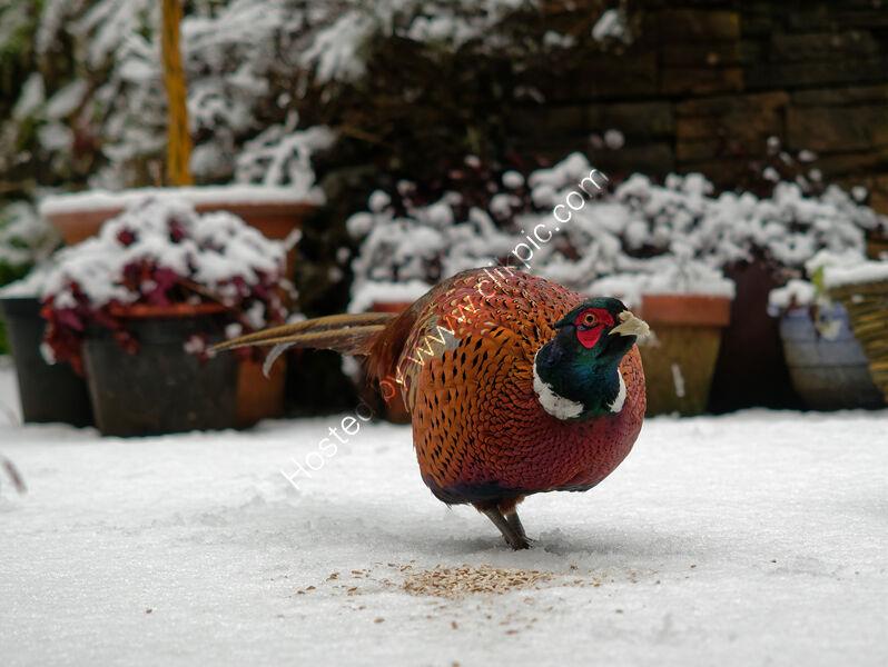 Garden visitor being fed